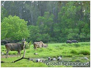 Исчезновение хищников в Северном полушарии влияет на состояние экосистемы