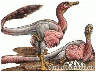 Яйца загадочного динозавра были обнаружены в Патагонии
