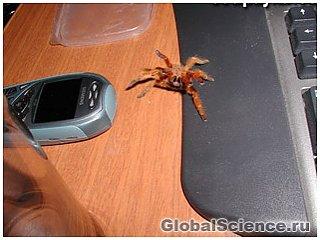 Реалістичні віртуальні павуки допоможуть перемогти Арахнофобія