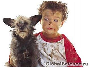 Ученые попытались прочитать мысли собак