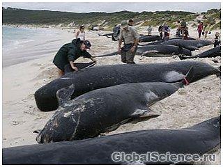 Власти Перу объявили причину массовой гибели дельфинов