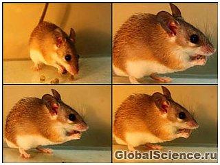 Растительный яд превращает мышь из потребителя семян растений в их распространителя