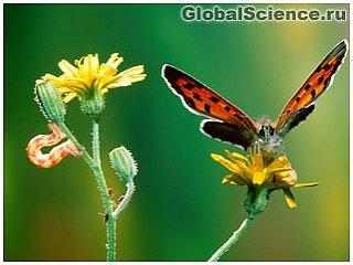 Растения служат насекомым в качестве почтальонов