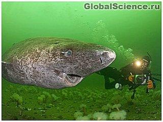 Гренландская акула медлительнее черепахи