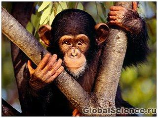 Опромінені мавпи стали сообразительнее