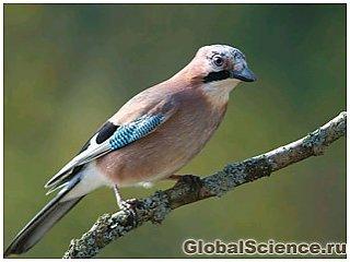 В чем отличие птичьего мышления от человеческого?