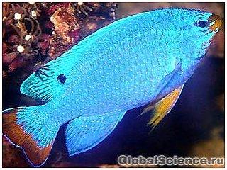 У рыб обнаружили рак кожи