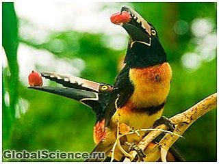 Размер клюва у птиц зависит от температуры