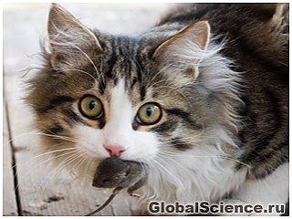 У кішок виявили таємне життя