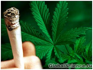 Курение канабиса провоцирует рак яичек