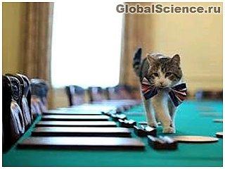 В Британском королевстве подрались коты министров