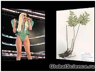 Имя Леди Гага увековечили, назвав им новый вид папоротника