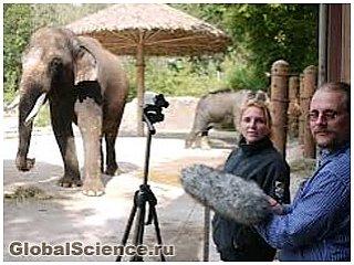 Слон, який говорить по-корейськи