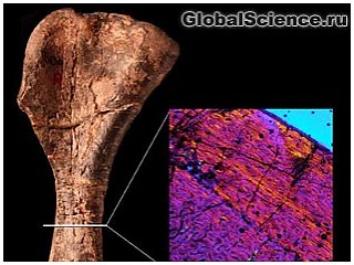 Палеонтологи обнаружили останки самого древнего динозавра