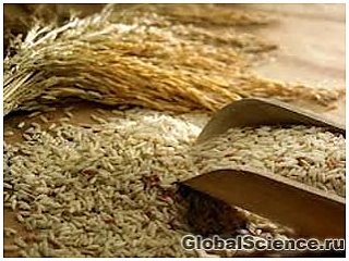 Рисовые отруби предотвращают развитие рака кишечника
