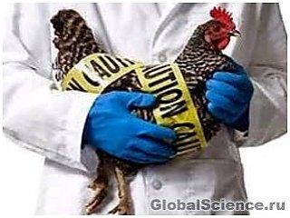Новый вид птичьего гриппа обнаружен в Индонезии