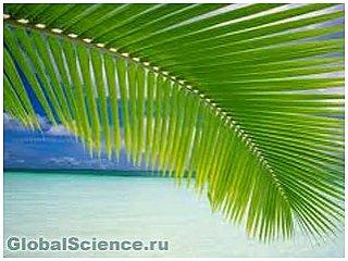 Очистить сточные воды помогут пальмовые листья
