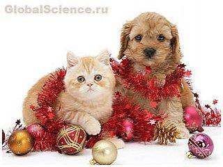Рождественские картинки, которые растопят даже самое ледяное сердце