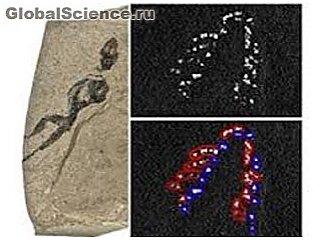 Физики предложили палеонтологам новый метод исследования ископаемых
