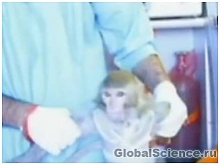 Запуск Ираном обезьяны в космос обеспокоил американцев