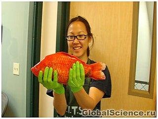 В озере Тахо обнаружена рыба-монстр