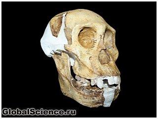 Зубы австралопитеков седиба стали подтверждением их родства с человеком