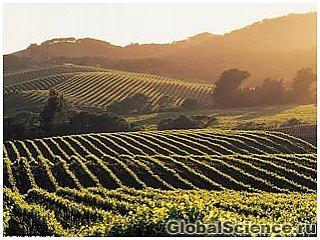 Глобальное потепление может уничтожить лучшие в мире виноградники