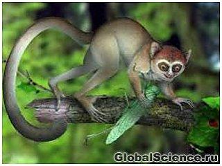 Предками человека были миниатюрные приматы, питавшиеся исключительно насекомыми