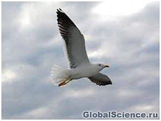 Скелет чайки возрастом 15 тысяч лет обнаружен в Дании