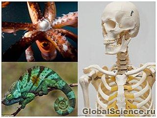 В будущем человек будет обладать гибким скелетом, щупальцами и кожей хамелеона