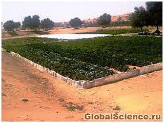 Японские ученые создали технологию озеленения пустынь