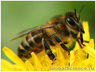 Инсектициды меняют гены пчел