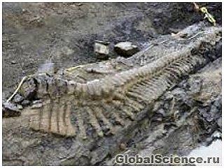 Длинный хвост динозавра обнаружен на севере Мексики