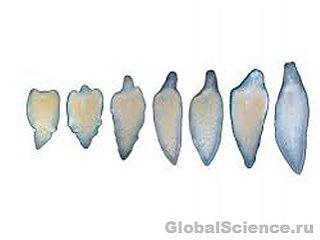Немецкие ученые впервые заставили регенерировать отрубленные головы червей