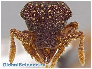 33 новых вида муравьев или ночной кошмар
