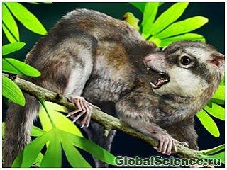 В Китае найдены останки вероятных предков млекопитающих