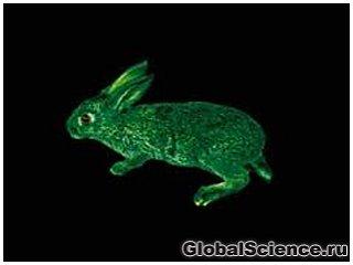 Організми тварин стануть фабрикою ліків