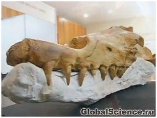 В Перу обнаружены останки ходячего кита