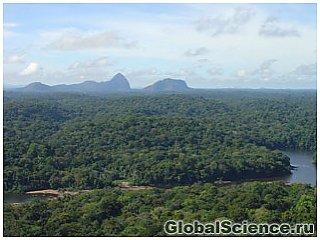 60 новых видов животных обнаружено в лесах Суринама