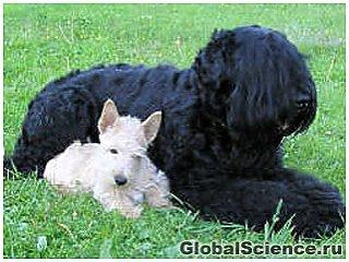 Ученые: собаки способны испытывать человеческие чувства