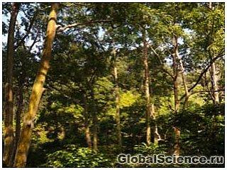 Австралийские ученые нашли золото в листьях эвкалипта