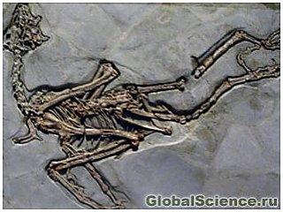 Следы древних птиц обнаружены в Австралии