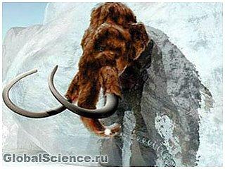 Учёные: мамонта клонировать невозможно