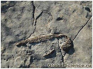 Геохимики исследовали останки древнейшей жировой ткани