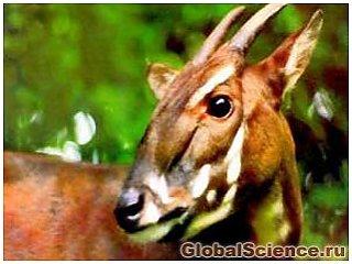 Редкое животное впервые сфотографировали во Вьетнаме