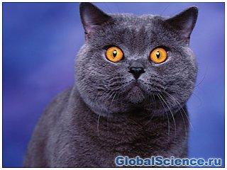 Американские ученые назвали Китай родиной домашних кошек