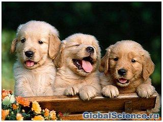 Дослідження довели, що собаки дізнаються знайомі обличчя на фото