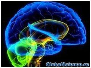 Синий цвет способен стимулировать мозговую деятельность