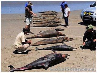 У побережья Перу погибло пятьсот дельфинов