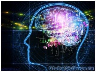 Ученые заняты созданием молекулярной модели головного мозга